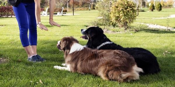 comportementaliset canin buzet sur tarn
